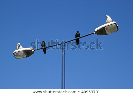two seagulls and two crows sharing a lamppost stock photo © latent