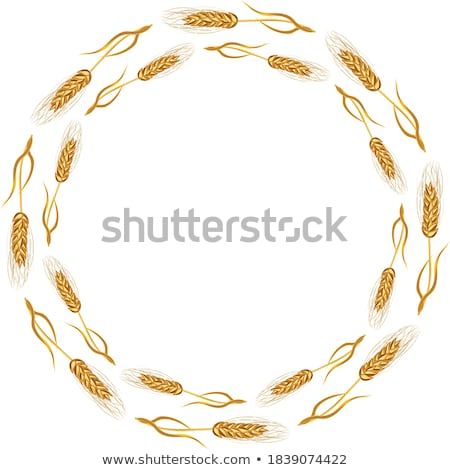 kaleidoscopic corn ear stock photo © stevanovicigor