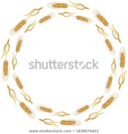 kaleidoscopic corn ear stock photo © stevanovicigor