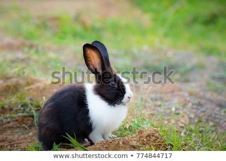ストックフォト: 赤ちゃん · 白 · ウサギ · 草 · バニー · 食べ