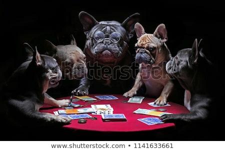 Ciddi poker oyuncu fotoğraf tablo Stok fotoğraf © sumners