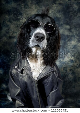 tough dog with leather jacket and shades stock photo © shevs