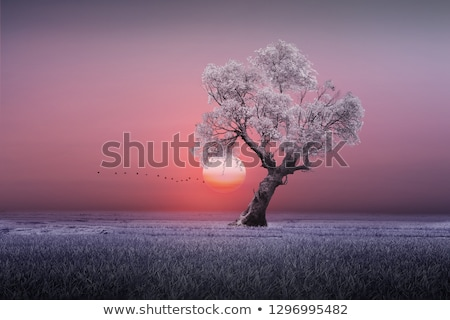 Amazing natural sunrise landscape with grass silhouette Stock photo © WaD