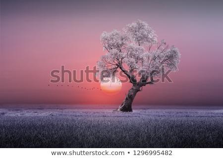 naplemente · fű · kék · ég · festett · üveg · ablak · égbolt - stock fotó © wad