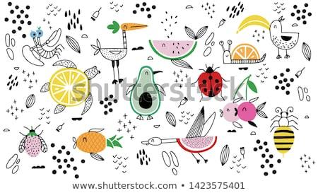 frutas · pera · manzana · naranja · blanco · fondo - foto stock © serpla