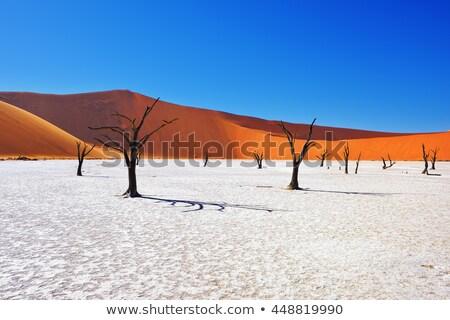 красный песок Намибия природы пейзаж синий Сток-фото © TanArt