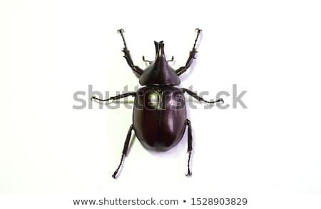 Bogár felső virág állat rovar környezet Stock fotó © brm1949