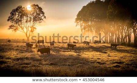 скота фермы Top мнение сельскохозяйственный механизм Сток-фото © photosil