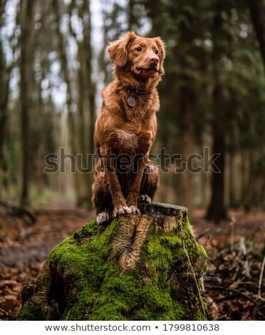 small dog sitting on grass stock photo © monkey_business