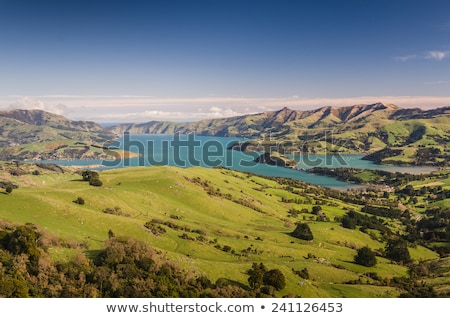 coastline at akaroa in new zealand stock photo © backyardproductions