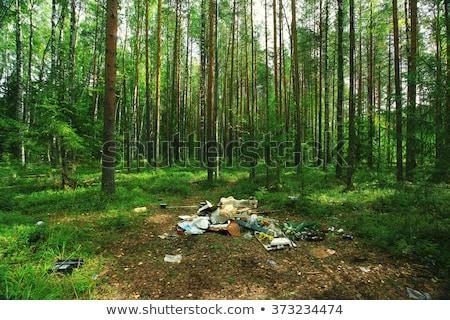 Dump in the woods Stock photo © fogen