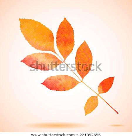 Orange watercolor painted vector ash tree leaf Stock photo © gladiolus
