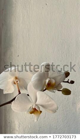Stock fotó: Edény · rózsaszín · orchidea · ág · friss · virágok