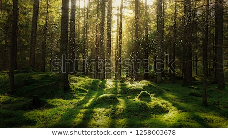 Green and mossy coniferous forest Stock photo © olandsfokus