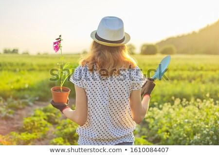 Vue arrière portrait femme pelle jardin arbre Photo stock © deandrobot