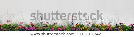 花壇 赤い花 空 花 花 家 ストックフォト © vlaru
