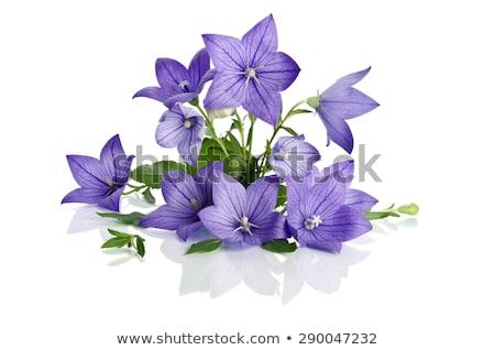 Harang virágok váza izolált fehér tavasz Stock fotó © tetkoren