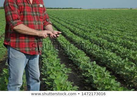 Profit from soybean cultivation Stock photo © stevanovicigor