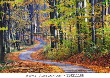 automne · route · coloré · feuillage · bois · arbre - photo stock © fesus
