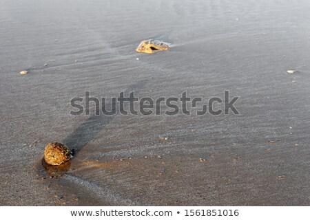 Posidonia algae seaweed dried texture mediterranean Stock photo © lunamarina