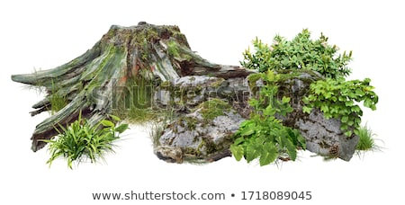 mossy tree in forest stock photo © master1305