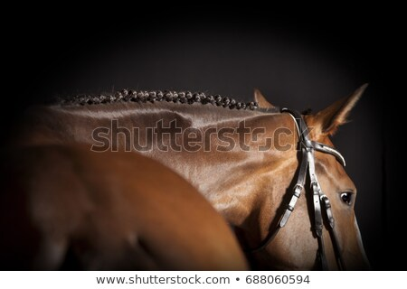 brown horse in profile stock photo © kayco