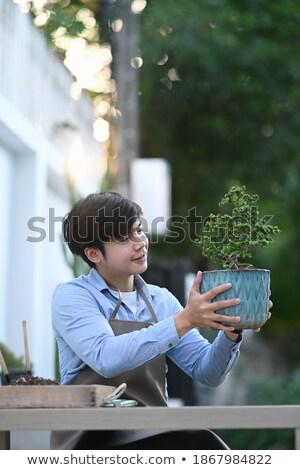 красивый мужчина садовник бонсай дерево банка Сток-фото © deandrobot