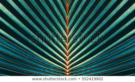 Detalhes folhas de palmeira dar harmônico estrutura árvore Foto stock © meinzahn