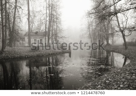 Misty automne matin parc automne Photo stock © SergeyAndreevich