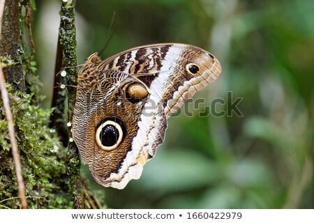 bagoly · ki · madár · állat · föld · természetes - stock fotó © idesign