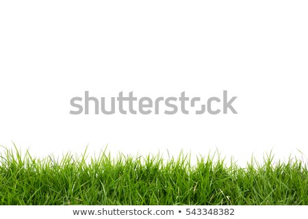 Stock photo: green grass on white background