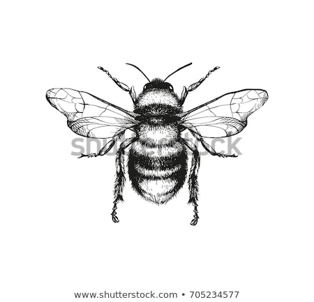 abelha · flor · pólen · primavera · jardim · margarida - foto stock © alexandkz
