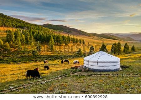 公園 · モンゴル国 · 家 · 草 · 自然 · 風景 - ストックフォト © bbbar