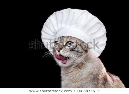 cat chef stock photo © lightsource