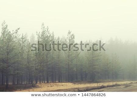 未舗装の道路 霧 日の出 午前 風景 ツリー ストックフォト © Juhku