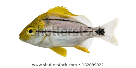 Side view of fish swimming Stock photo © wavebreak_media