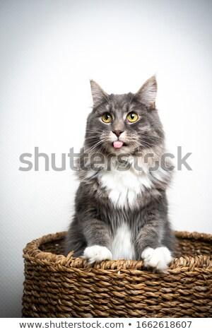 Gatto grigio basket illustrazione natura sfondo arte Foto d'archivio © bluering