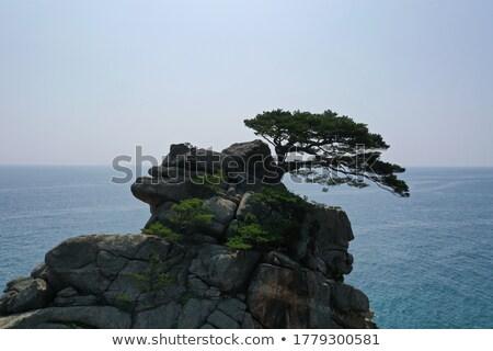 pejzaż · morski · pory · roku · morza · niebo · horyzoncie · lata - zdjęcia stock © kotenko