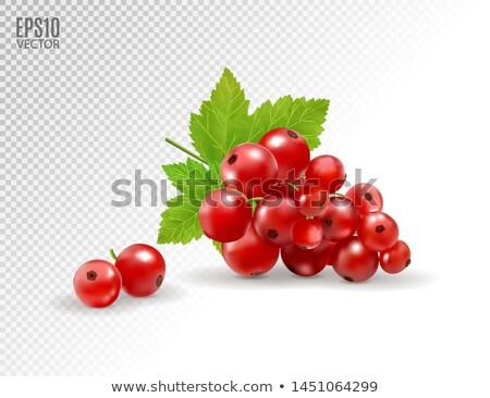 Piros ribiszke fehér levelek izolált illusztráció Stock fotó © ConceptCafe