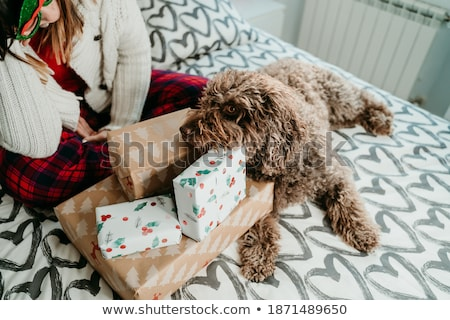 meisje · hond · winter · gelukkig · mooie · leggen - stockfoto © dash