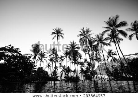naplemente · napfelkelte · pálmafa · gyönyörű · vektor · eps - stock fotó © orensila