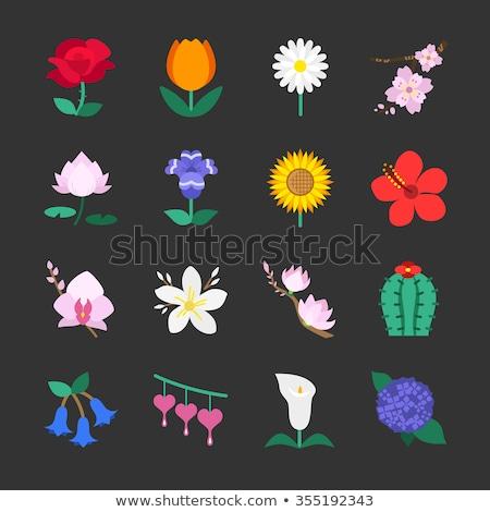 Tulipán virág ikon virág vektor piktogram stílus Stock fotó © ahasoft