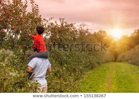 Father and son apple picking in trees Stock photo © IS2