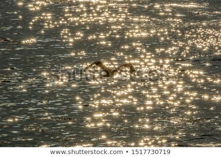 Formacja morza pomarańczowy ocean ptaków Zdjęcia stock © taviphoto