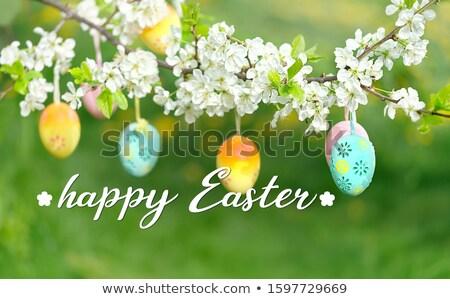 Paskalya yumurtası çiçek pembe yumurta küçük yuva Stok fotoğraf © Karaidel