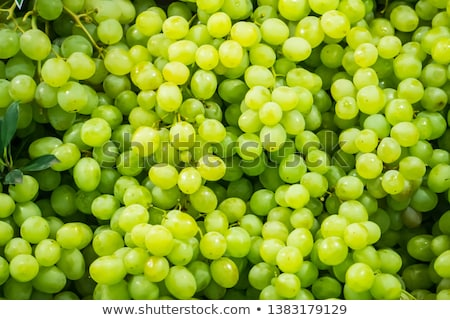 Harvest background with green grape Stock photo © TasiPas