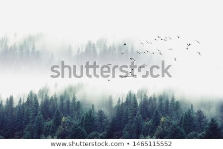 árvores névoa luz solar sol pôr do sol folha Foto stock © Pozn