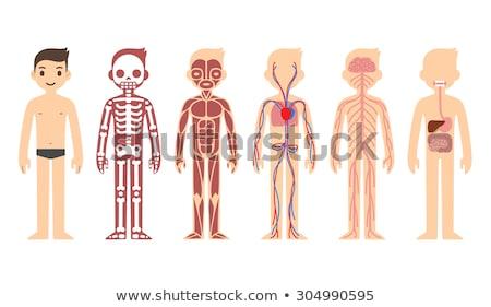 Anatomy of human body flat infographic Stock photo © jossdiim