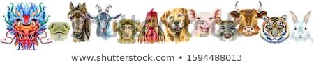 coq · horoscope · personnage · couleur · pour · aquarelle · illustration · isolé - photo stock © natalia_1947