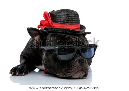 adorable french bulldog with sunglasses lying Stock photo © feedough